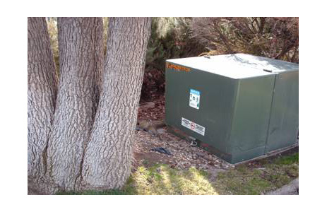 Tree shown in safe working space for transformer