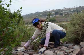 Coastal Cleanup volunteer at Agua Hediona
