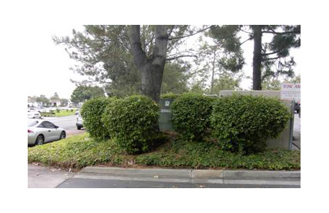 Pine tree and bushes shown in safe working space for transformer